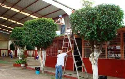 arborizacion Conaf