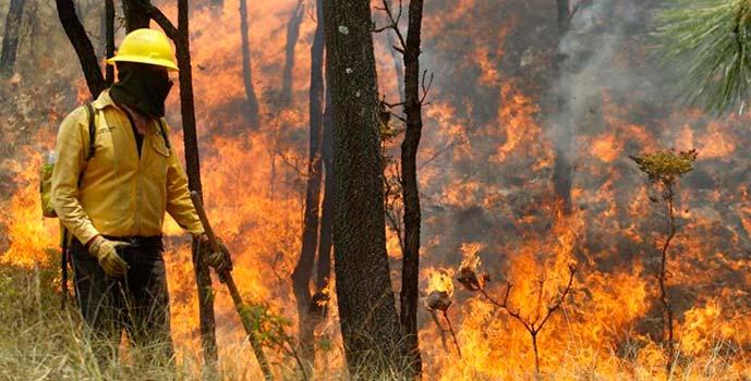 Conaf incendios forestales_3