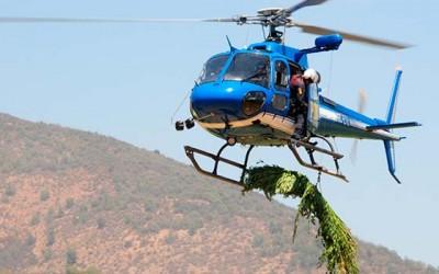 PDI nuevas plantaciones marihuana