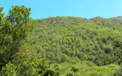 Conaf dia internacional de los bosques
