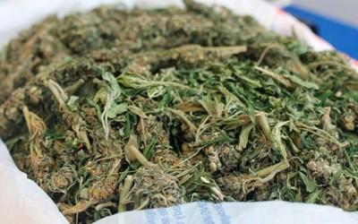 PDI Marihuana en casa