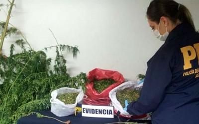 PDI marihuana en Santa Cruz