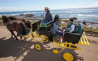 sernatur aumento demanda turistica