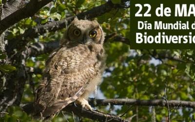 Conaf-dia-mundial-de-la-biodiversidad