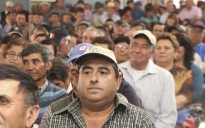 Indap ayuda a 250 agricultores