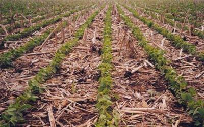 Indap mejorar suelos agropecuarios
