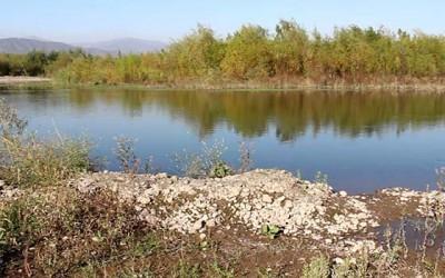 Pichidegua ribera sur rio Cachapoal