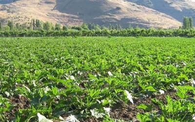 Indap aportes para productividad de suelos