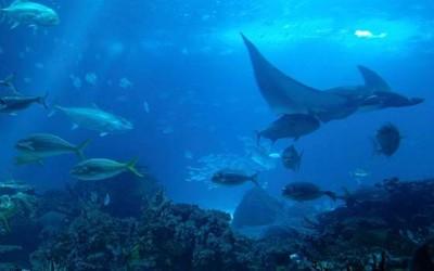 Paredones dia de los oceanos