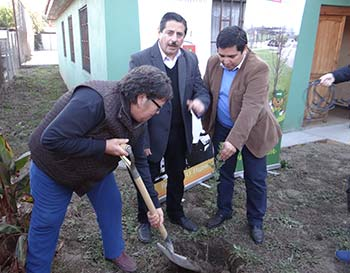 Conaf arborizacion quinta de tilcoco