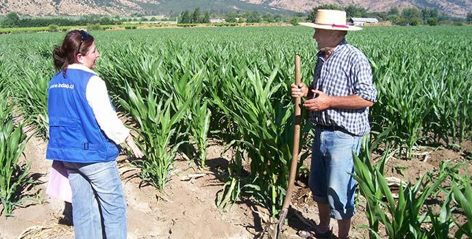 Indap 2 mil millones produccion de maiz
