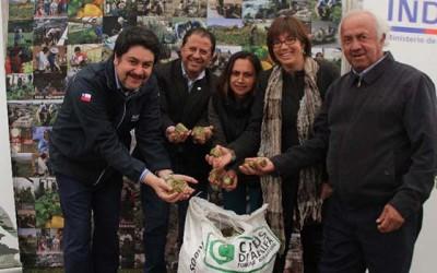 Indap ayuda alfalfa agricultores secano