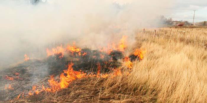 Incendio forestal matorrales