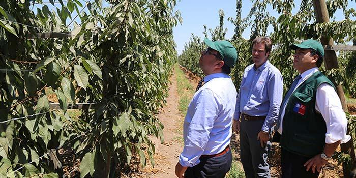 Alianza p blica privada permite apertura de mercados for Viveros en rancagua