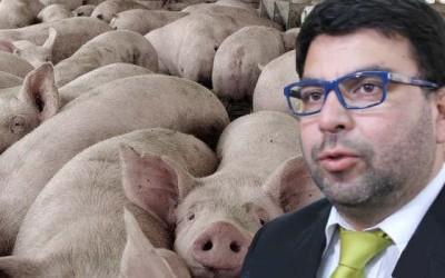 Intendente instalacion de cerdos