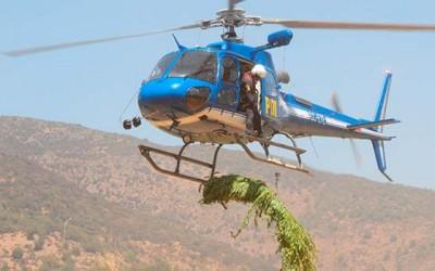 PDI incauta mas de 600 plantas de marihuana en Pichilemu
