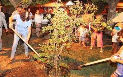 Municipalidad de Graneros inicia Plan de Reforestacion Comunal