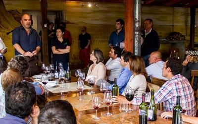 Corfo potencia produccion de vinos premium de pequeños viñateros