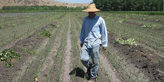 Invitan a mejorar productividad de suelos de pequeños agricultores