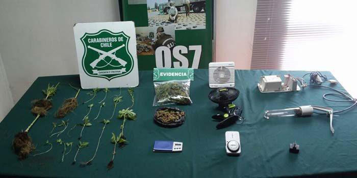 Carabineros Detenido por cultivo de marihuana