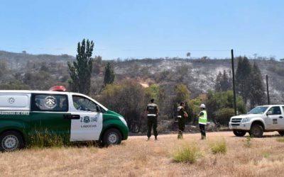 Carabineros investiga incendio forestal en Litueche