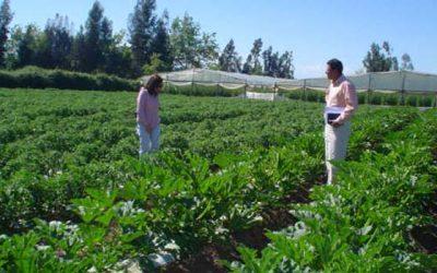 Gobierno regional asignará recursos a agricultores afectados por lluvias