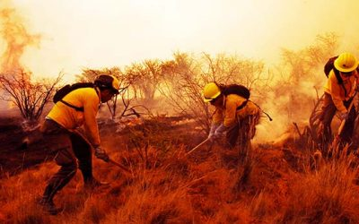 Conaf incendio forestal