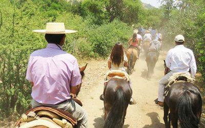 Región de OHiggins inicia oficialmente su temporada estival en reserva ecológica Palmas de Pitrucao