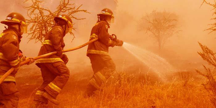 Fijan en 120 días el plazo de investigación por incendio forestal en Chépica