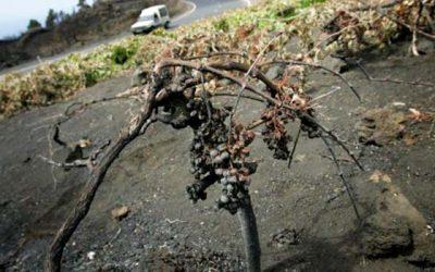 Sector vitivinícola se moviliza ante emergencia por los incendios