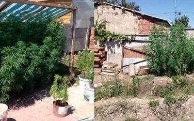 carabineros Un detenido por infracción a la ley de drogas en comuna de Olivar