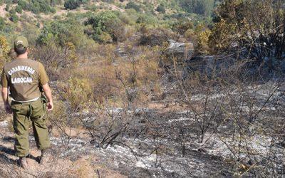 Carabineros investiga incendio forestal comuna de Machalí