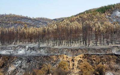 incendios forestales conaf