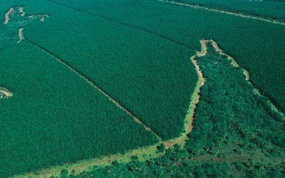 Faber-Castell celebra el día de la tierra produciendo lápices sustentables