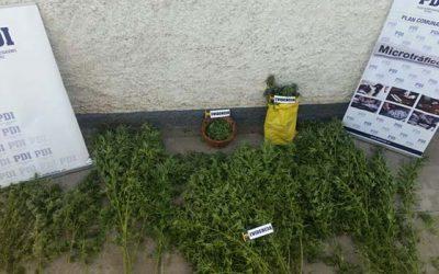 PDI efectúa procedimientos por drogas en Rengo