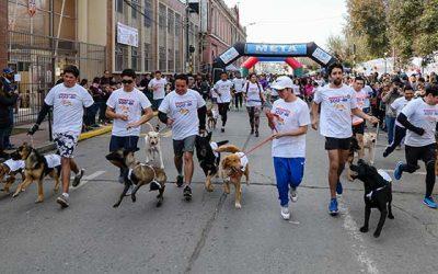 San Fernando corrió junto a sus mascotas en la Perrotón 2017