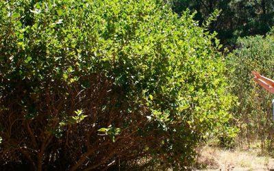 Concurso del bosque nativo copa fondo de bonificaciones