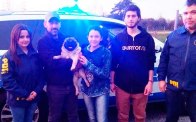 PDI recupera perro Pug a casi un año de su robo