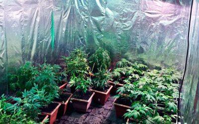 PDI detecta cultivo indoor de cannabis sector norte de Rancagua