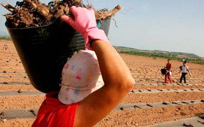 Aumenta fiscalización por riegos de exposición de trabajadores a la radiación UV
