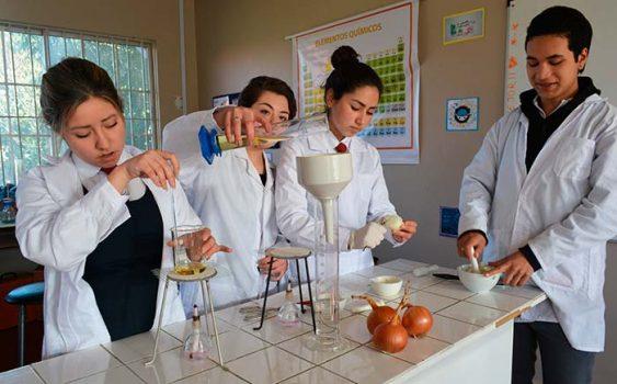 Estudiantes de Chépica transforman cebollas orgánicas en cosméticos