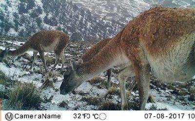 Guardaparques aprenden analizar fotografías de las cámaras trampa en los parques nacionales
