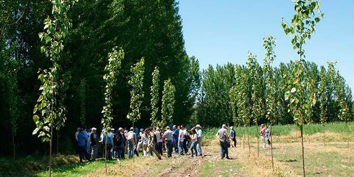 Conaf y municipio de Coltauco participan en visita de expertos a bosques de álamo