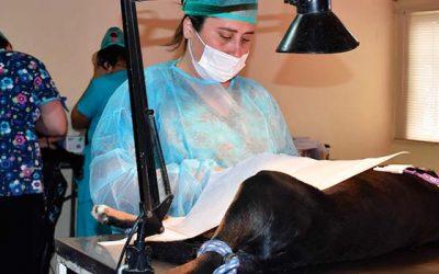Exitosa campaña de esterilización masiva de perros y gatos en San Fernando