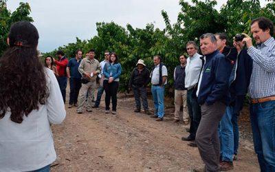 INIA Rayentué realiza día de campo en control de cáncer bacteriano en huertos de cerezos