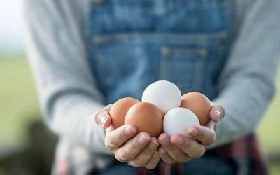 Nestlé se compromete a que en el 2025 sólo usará huevos de gallinas libres de jaulas