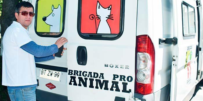 Ambulancia para perros en Mostazal