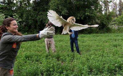 El Teniente se compromete con la biodiversidad de la región de OHiggins