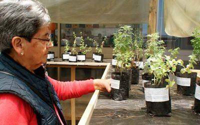 Inauguran vivero de medicina alternativa al interior de Cesfam 6 en Rancagua