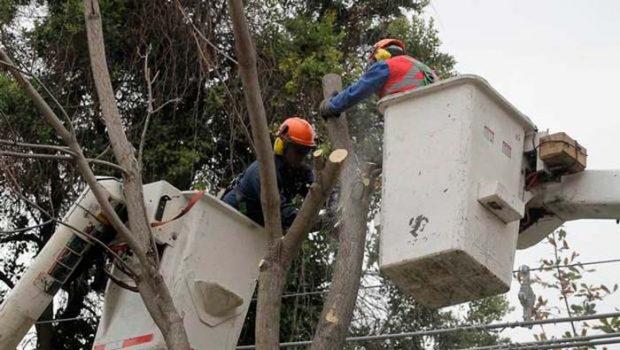 Interponen Recurso de Protección contra CGE por tala de árboles